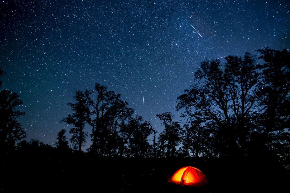 Schauen Sie gemeinsam mit Grevy in die Sterne!  | Es ist soweit, die Sternschnuppen kommen