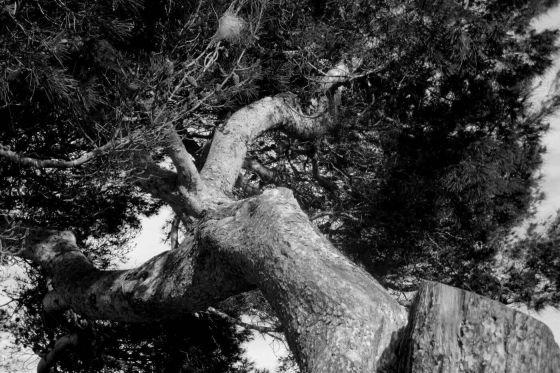 Christine Kaul - árboles I - Photographie