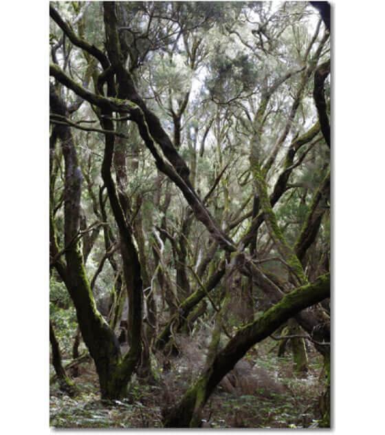 Traumwälder 04.06.2020 - 07:09