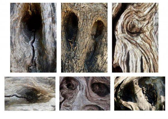 <em>Kunstwerk bearbeiten</em>: Olivetree's Eyes 07.10.2018 - 12:17