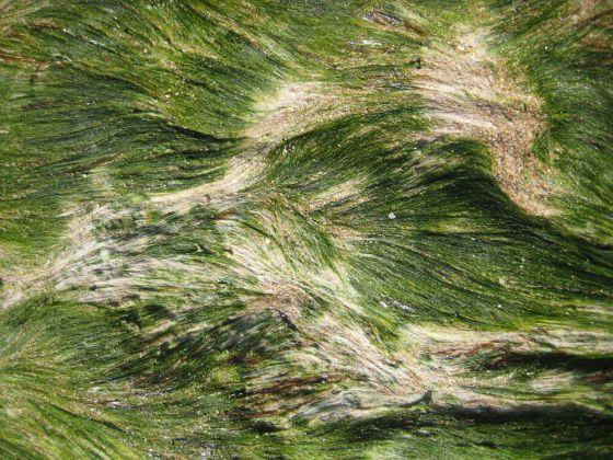 Christine Kaul - Tide 1 - Photographie