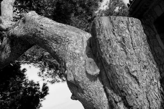 Christine Kaul - árboles II - Photographie