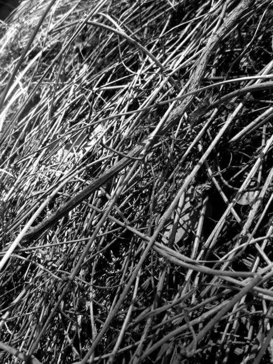 Christine Kaul - arbustos II - Photographie