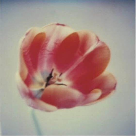 Susanne Pareike - Blume geöffnet - Digitale Malerei