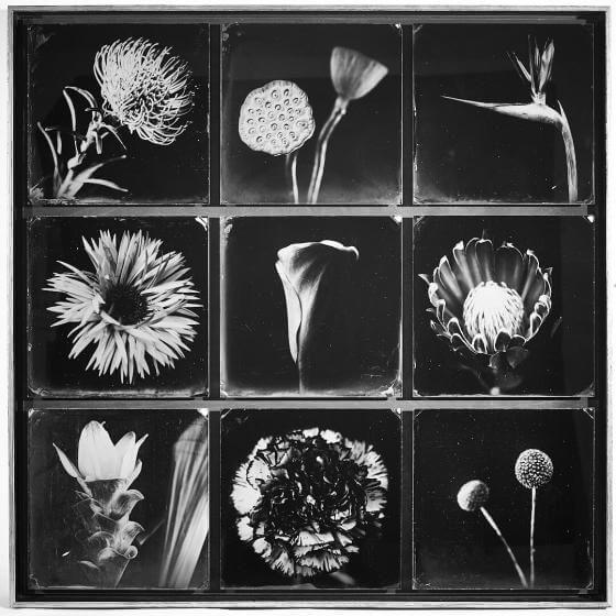 Fleurs sans Coleurs