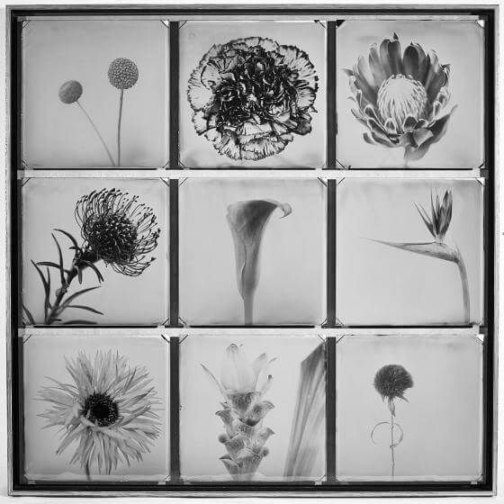 Fleur sans Coleurs