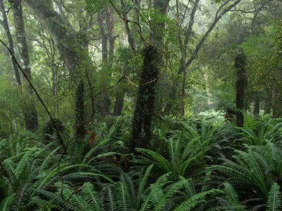Rainforest 01, Neuseeland 29.07.2020 - 02:41