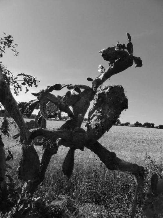 Christine Kaul - Opuntie 7 - Photographie