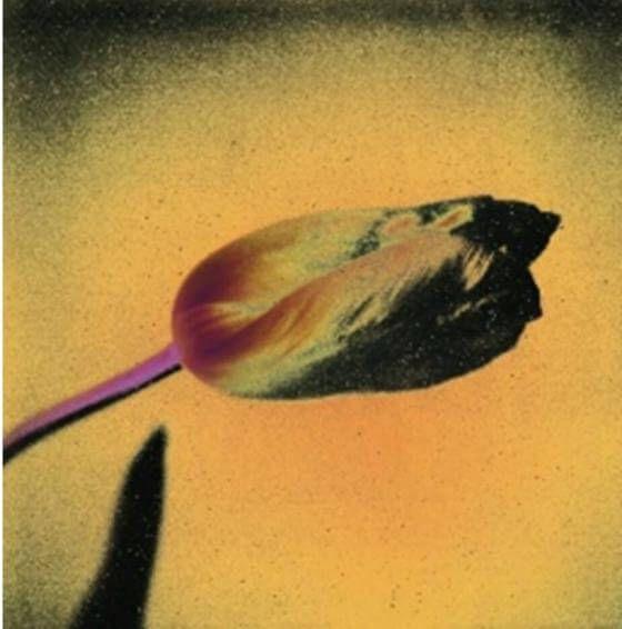 Susanne Pareike - Tulpe mit rosafarbenem Stiel - Digitale Malerei