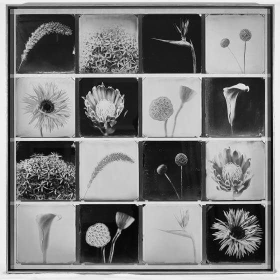 Fleurs sans Coleurs - black and white -